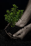 Árbol en manos Imagen de archivo libre de regalías
