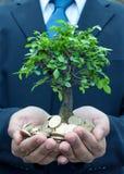 Árbol en manos del hombre de negocios Fotos de archivo libres de regalías