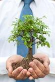 Árbol en manos del hombre de negocios Imagen de archivo libre de regalías