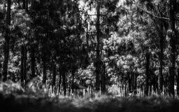 Árbol en medios Imagenes de archivo