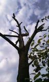 Árbol en mi patio trasero Fotos de archivo