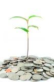 Árbol en monedas Imagen de archivo libre de regalías