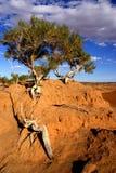 Árbol en Mongolia Fotos de archivo libres de regalías