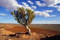 Árbol en Mongolia Fotografía de archivo libre de regalías