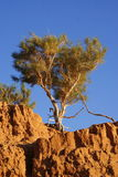 Árbol en Mongolia Foto de archivo