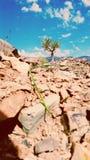 Árbol en montañas Fotografía de archivo libre de regalías