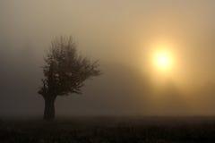 Árbol en niebla Imagen de archivo libre de regalías