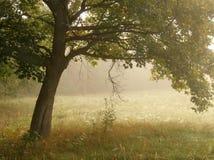 Árbol en niebla fotografía de archivo libre de regalías