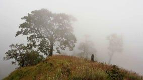 Árbol en niebla Fotos de archivo