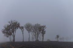 Árbol en niebla Imágenes de archivo libres de regalías