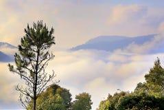 Árbol en niebla Fotos de archivo libres de regalías