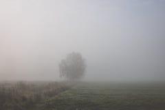 Árbol en niebla Imagenes de archivo