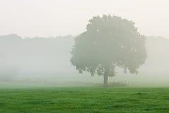 Árbol en niebla de la mañana Fotografía de archivo libre de regalías