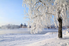 Árbol en nieve fotografía de archivo