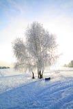 Árbol en nieve fotos de archivo