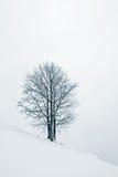 Árbol en nieve Fotos de archivo libres de regalías