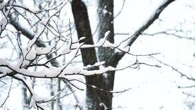 Árbol en nieve Escena escénica hermosa del invierno almacen de video