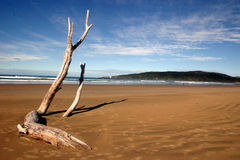Árbol en orilla Imagen de archivo libre de regalías