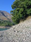 Árbol en orilla del lago foto de archivo libre de regalías
