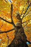 Árbol en otoño Fotos de archivo