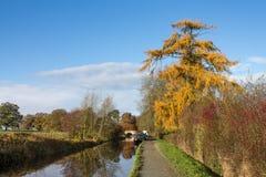 Árbol en otoño fotografía de archivo