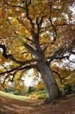Árbol en otoño Imagen de archivo libre de regalías