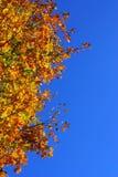 Árbol en otoño de la caída Fotos de archivo