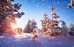 Árbol en paisaje del invierno foto de archivo