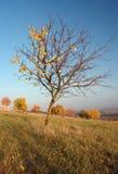 Árbol en paisaje del otoño foto de archivo