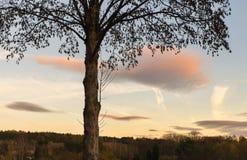 Árbol en paisaje en puesta del sol Foto de archivo