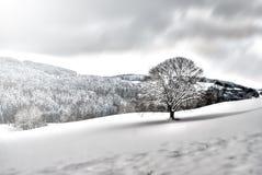 Árbol en paisaje nevoso fotos de archivo libres de regalías