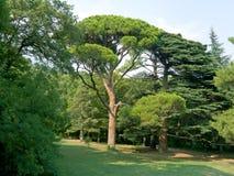 Árbol en parque Foto de archivo