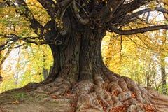 Árbol en parque Fotos de archivo