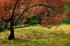 Árbol en parque Imagen de archivo libre de regalías