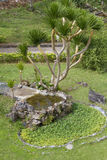 Árbol en parque Fotografía de archivo libre de regalías