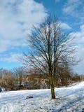 Árbol en parque Fotografía de archivo