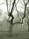 Árbol en parque en sepia Imagen de archivo libre de regalías