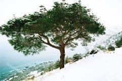 Árbol en pasamontañas Imagenes de archivo