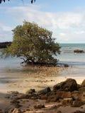 Árbol en playa foto de archivo