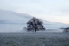 Árbol en prado Foto de archivo libre de regalías