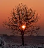 Árbol en puesta del sol imagenes de archivo