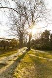 Árbol en puesta del sol Foto de archivo libre de regalías