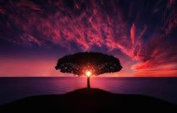 Árbol en puesta del sol foto de archivo