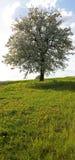 Árbol en resorte Foto de archivo libre de regalías