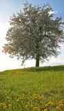 Árbol en resorte Fotografía de archivo