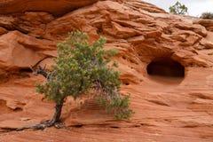 Árbol en roca Fotos de archivo libres de regalías