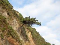 Árbol en roca Fotos de archivo