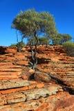 Árbol en rocas rojas Fotografía de archivo