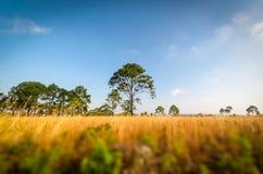 Árbol en sabana Fotos de archivo