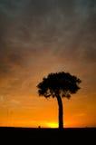 Árbol en salida del sol Foto de archivo